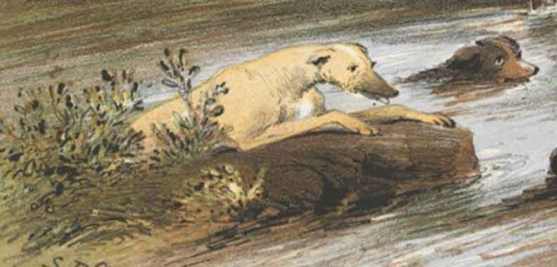 Watercolour of two dogs swimming through a river