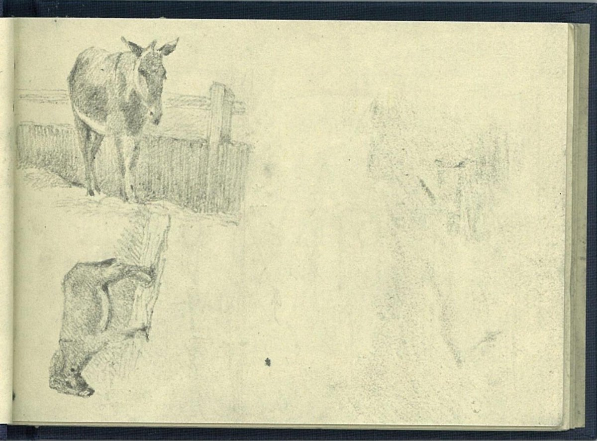 Sketch of donkeys