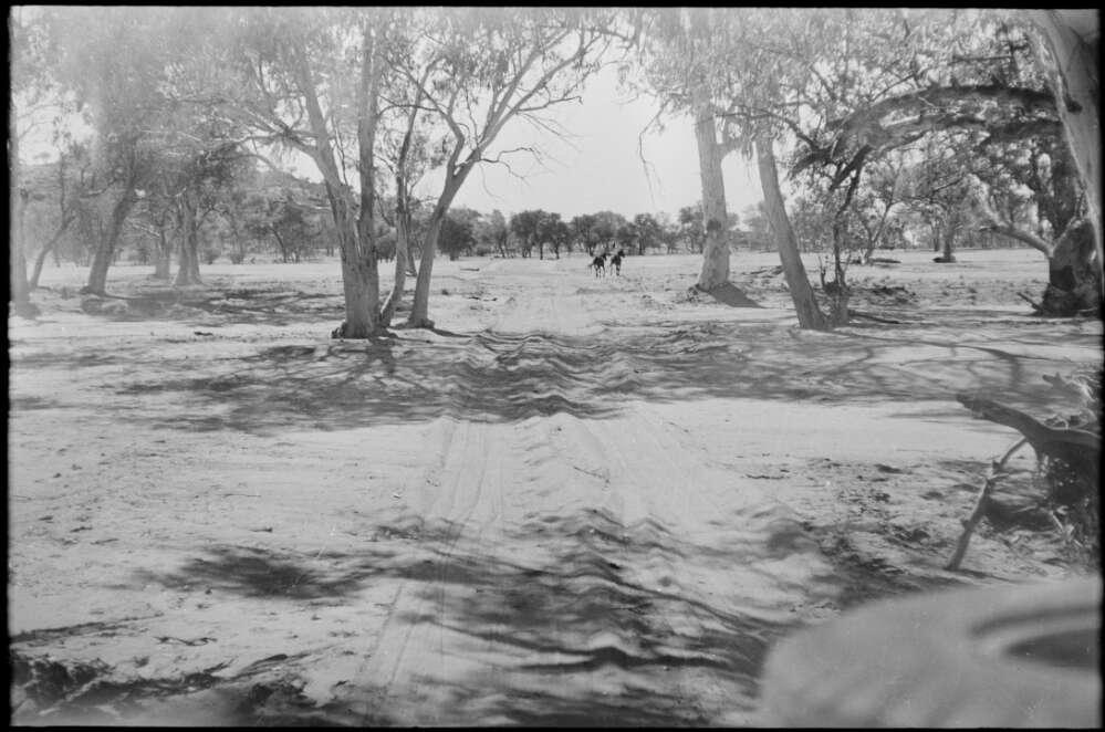 Dirt road through trees, Jay Creek region, Northern Territory, 1961, 2 / Michael Terry