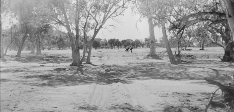 Dirt road through trees, Jay Creek region, Northern Territory, 1961, 2 / Michael Terry
