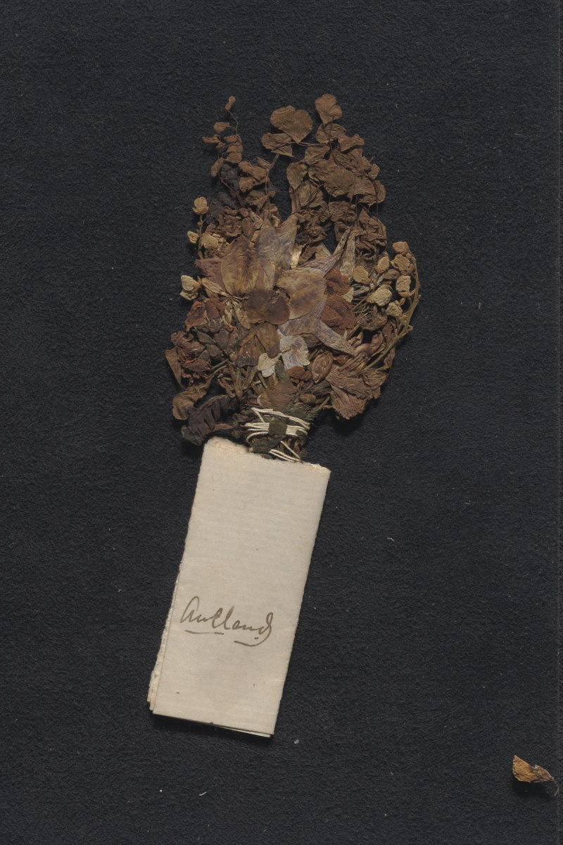 A pressed bouquet of flowers