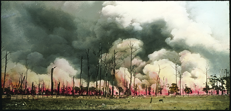 Image of a bush fire