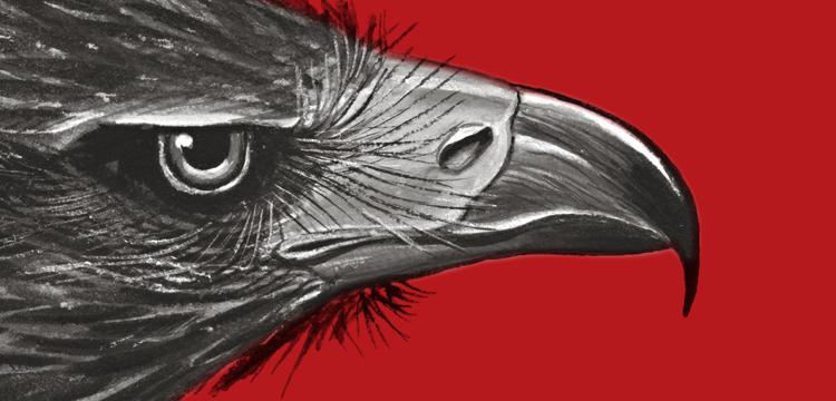 Cover of Australian Predators of the Sky