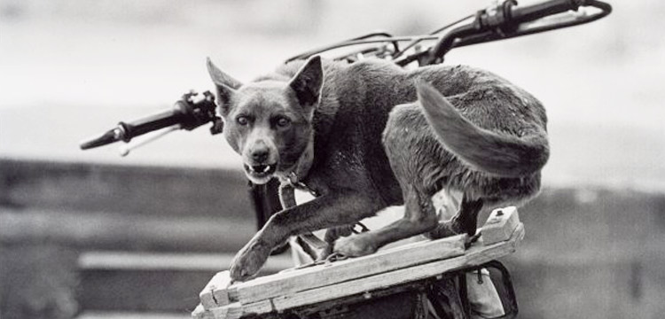 Image of a dog on the back of a motorcycle
