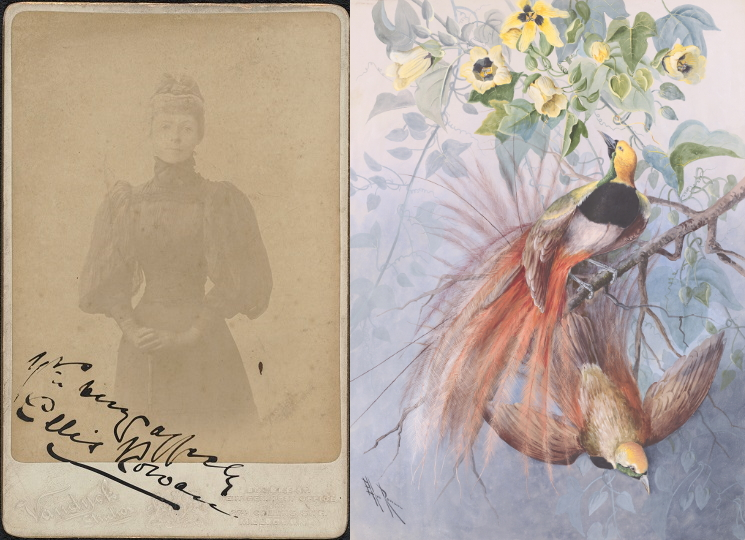 A side-by-side image of Ellis Rowan on the left, with a Bird of Paradise artwork on the right.