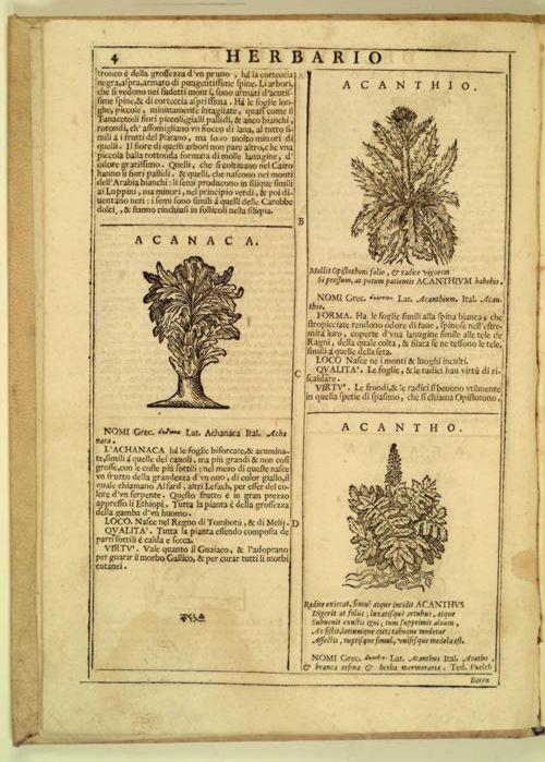 Herbario nuovo page