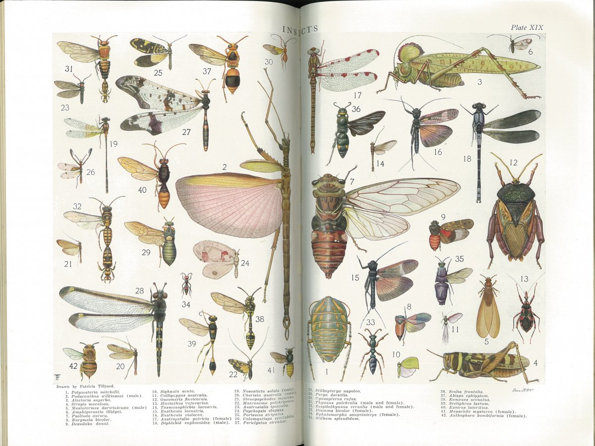 Insects plate