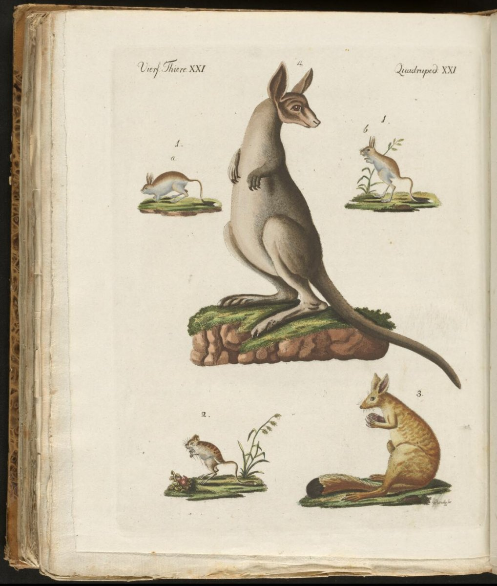 marsupials from the Bilderbuch