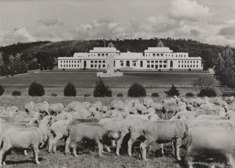 A white bulding in the background with a paddock with sheep in the foreground