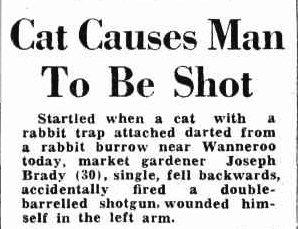 An article about a man being shot by a cat