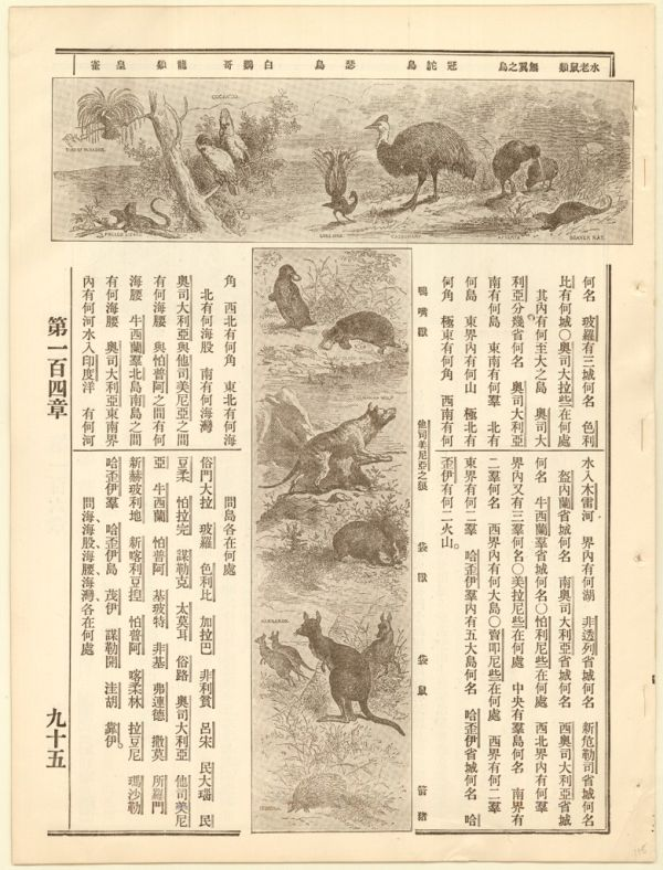 Illustration of Australian animals with Chinese characters