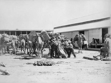 Afghans Loading Camels