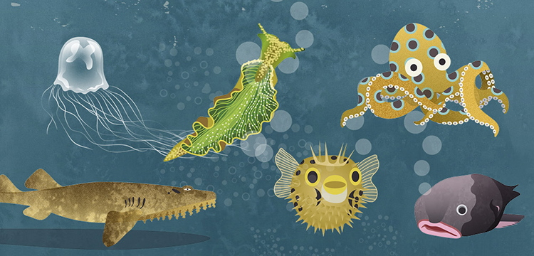 Sea creatures from Fauna: Australia's Most Curious Creatures by Tania McCartney