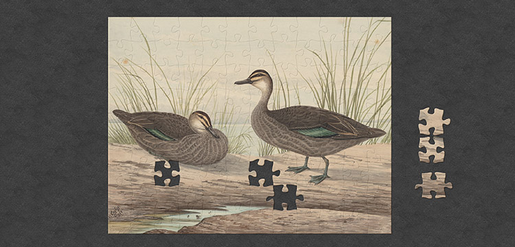 An almost complete jigsaw puzzle featuring an image of ducks