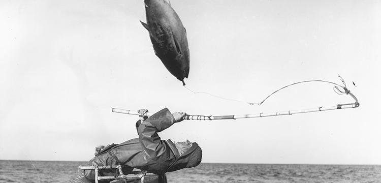 Tuna fishing at Eden, New South Wales, 1960