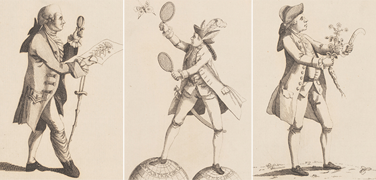 'The Botanic Macaroni', 'The Fly Catching Macaroni', and 'The Simpling Macaroni', 1772
