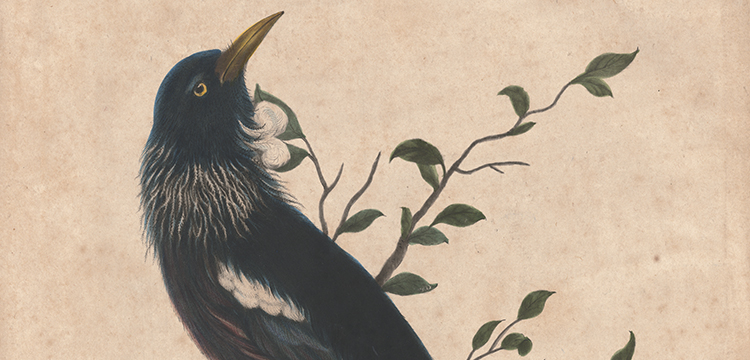 Robert Laurie, 'The Poa', 1784
