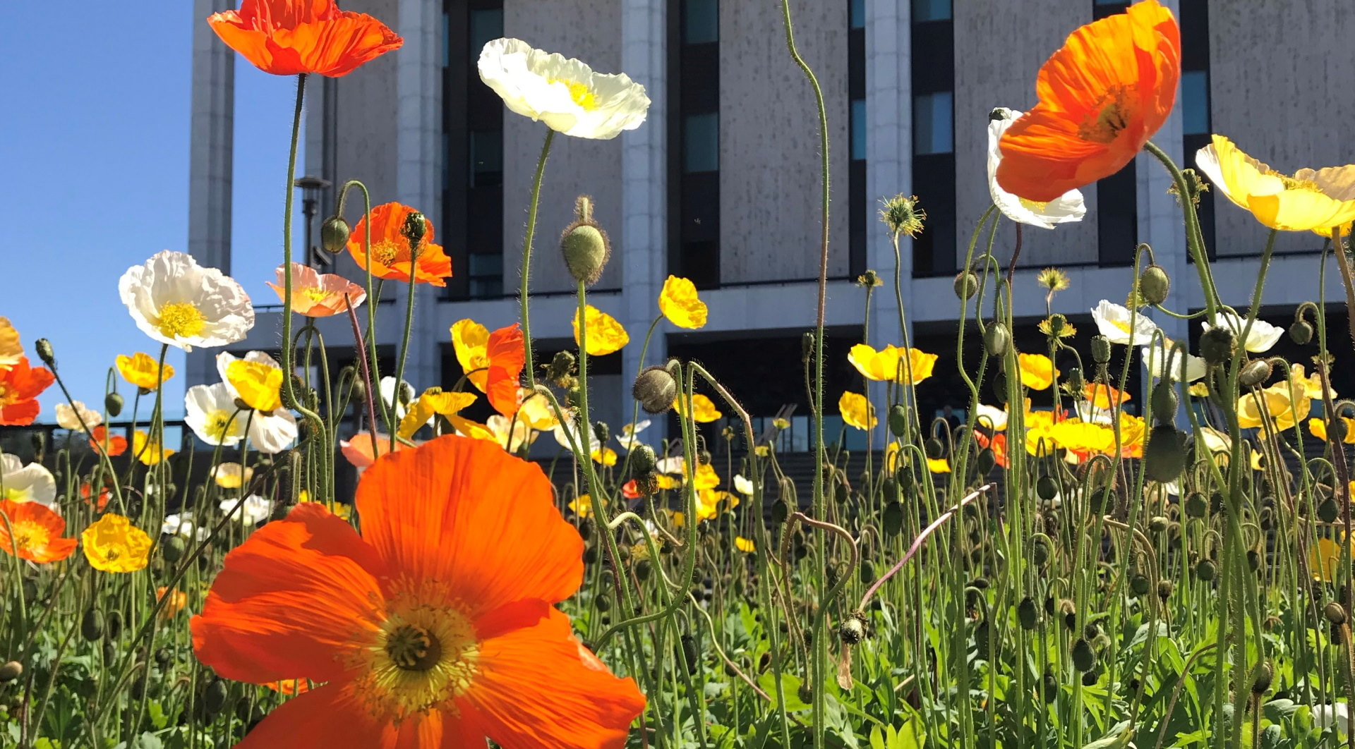 Flowers in front of the National Library building