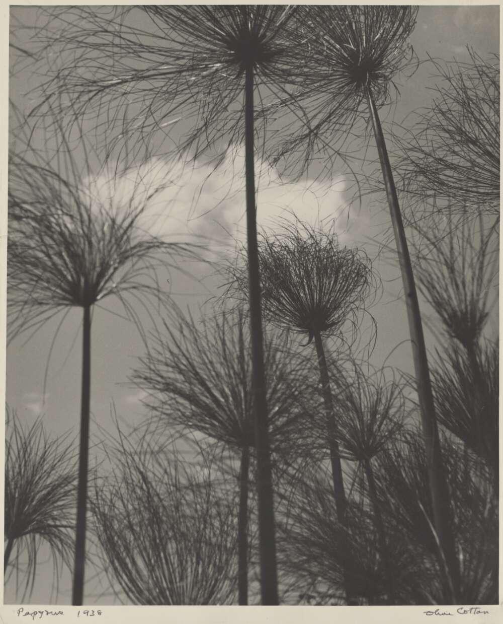 Cotton, Olive. Papyrus : , 1938. Web. 9 December 2020
