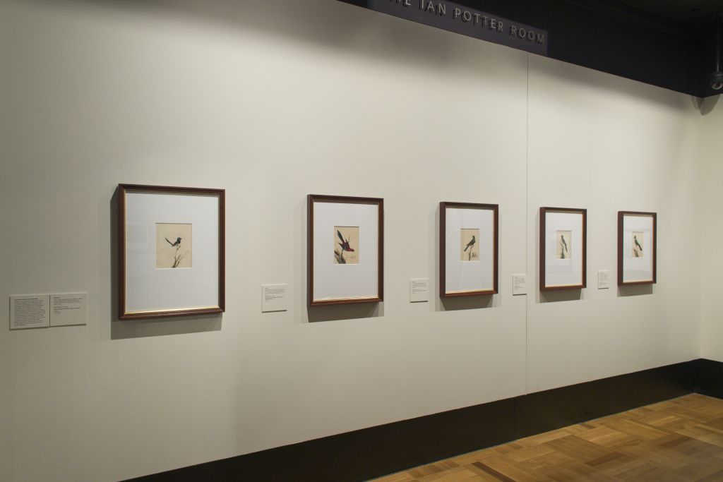 Five watercolour paintings by Sarah Stone, as installed in the National Library of Australia's Treasures Gallery