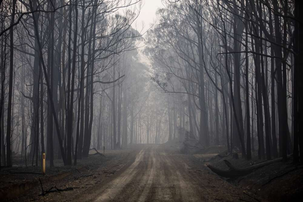 Davey, Sean. Aftermath of a large bushfire that swept through forest area along Yowrie Road, Yowrie, New South Wales, 31 December 2019 : , . Web. 9 December 2020