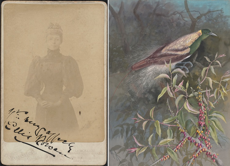 On the left, a faded sepia portrait of a woman in a dark dress with a high neckline, corset waist, full skirt and puffy full-length sleeves, and on the right a painting of a bird with green head and underbelly and brown back and tail feathers in a tree