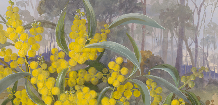 Detail of Ellis Rowan painting of Acacia pycnantha