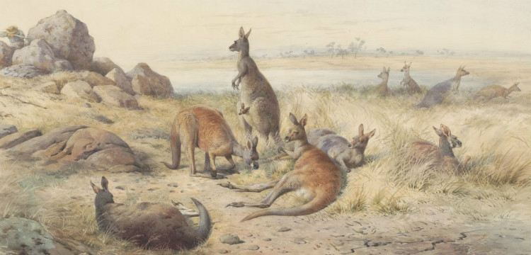 The haunt of the kangaroo 1885, by William Strutt
