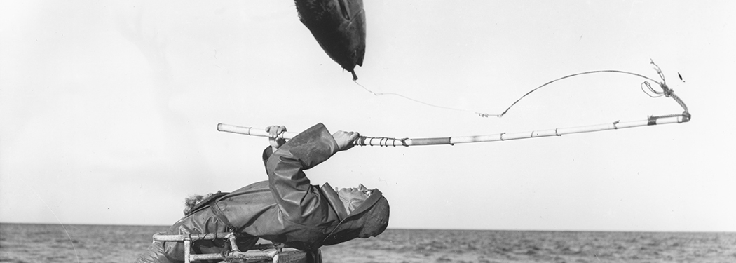 Tuna fishing at Eden, New South Wales, 1960