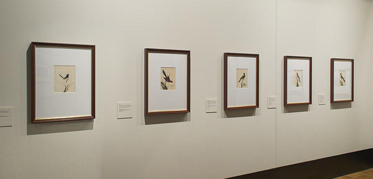 Sarah Stone artworks in National Library of Australia Treasures Gallery